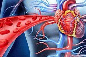 Les solutions naturelles pour améliorer la circulation sanguine
